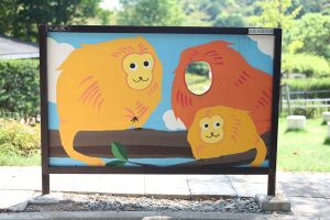 ゴールデン・ライオン・タマリンの顔ハメ看板