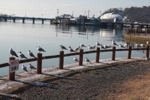 旧北上川から石ノ森蔓画館 2011.3.11午前撮影