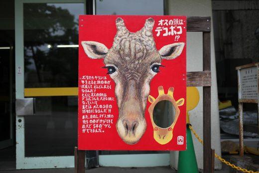 キリンの顔ドアップ顔ハメ看板