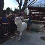 東武動物公園のアルパカ